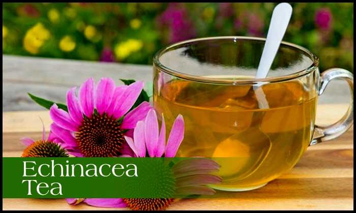 इचिनेशिया चाय